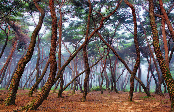 beautiful-mysterious-forests-4__880