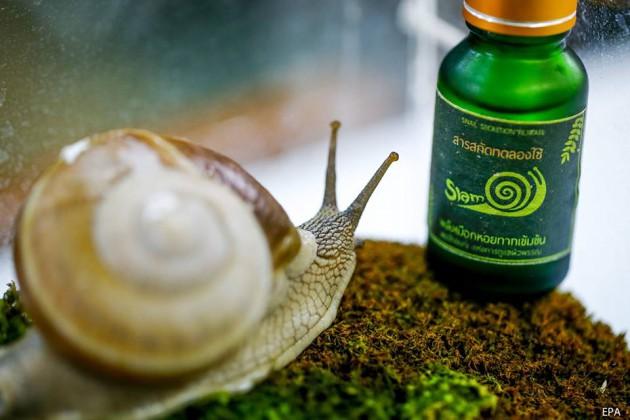 Siam-Snail-2-630x420