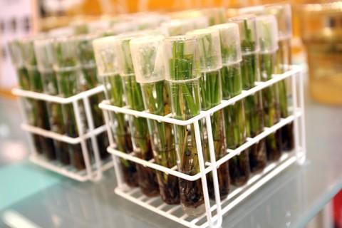 遺伝子組み替え食品