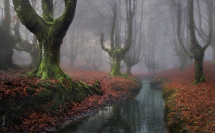 beautiful-mysterious-forests-221__880