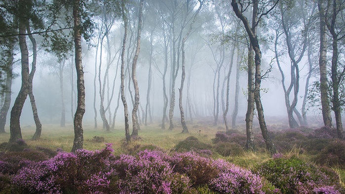 beautiful-mysterious-forests-10__880
