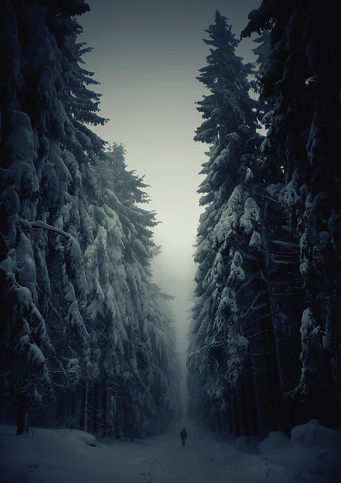 beautiful-mysterious-forests-1__880