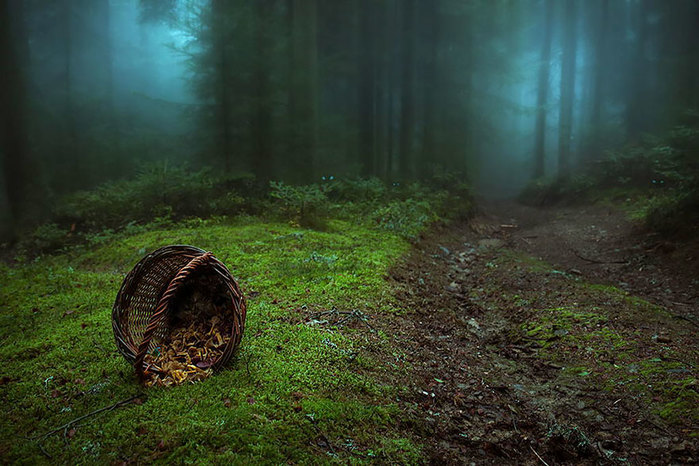 beautiful-mysterious-forests-9__880