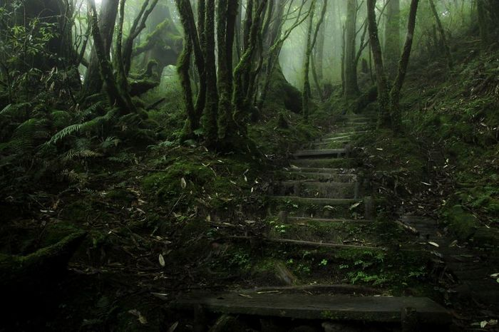 beautiful-mysterious-forests-17__880