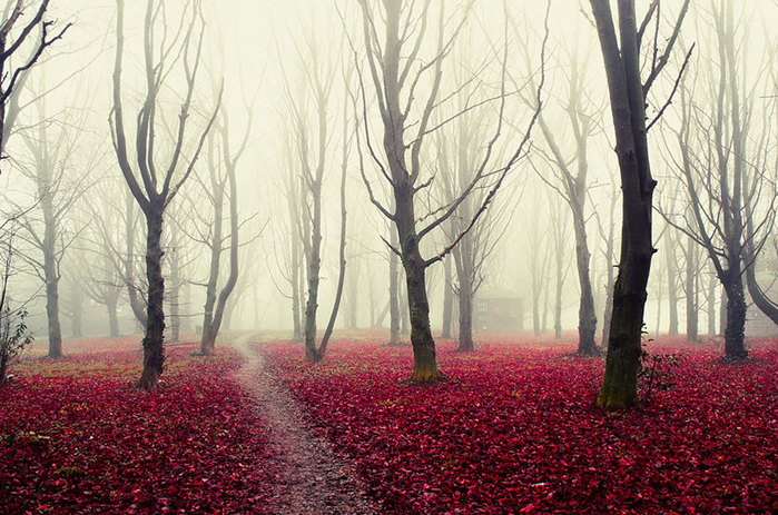 beautiful-mysterious-forests-14__880