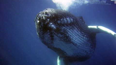 lonely-whale-exlarge-169