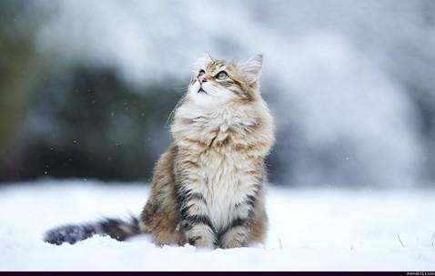 Snow-Cat
