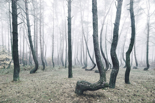 crooked-forest-krzywy-las-kilian-schonberger-poland-9