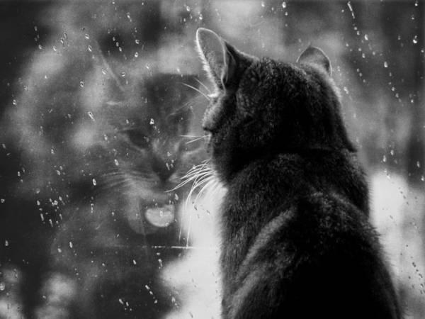 feline16