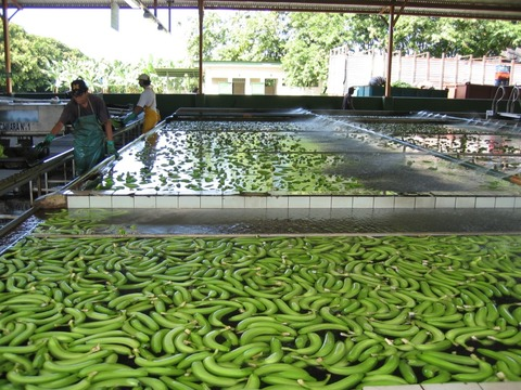 BananaFactory