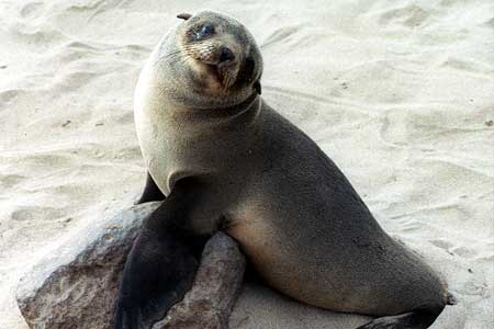 Seal0