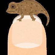 animal_micro_hime_chameleon.png