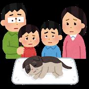 pet_kazoku_mitoru_cat.png